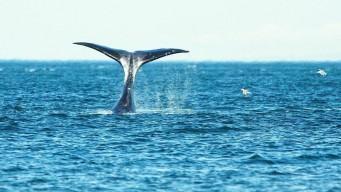 Whale Watching - наблюдение за китами Охотоморья. Эконом