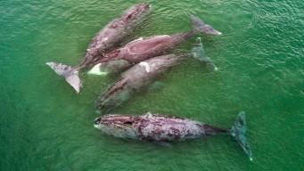 Whale Watching - наблюдение за китами Охотоморья. Стандарт
